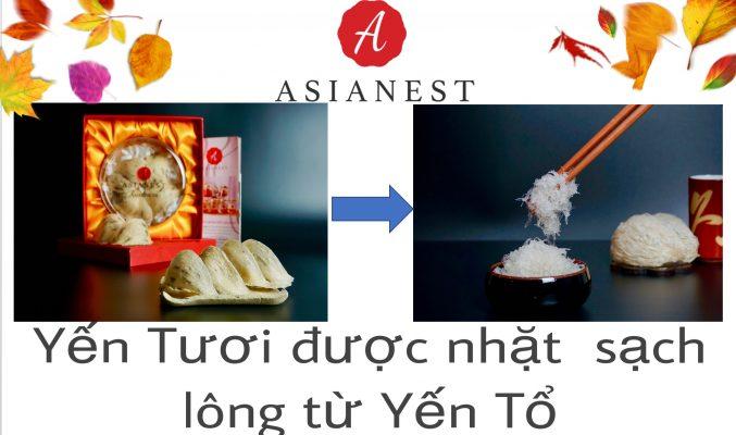 Yen-Duoc-Nhat-Sach-Long-Tu-Yen-To